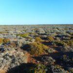 Great Nullarbor Desert